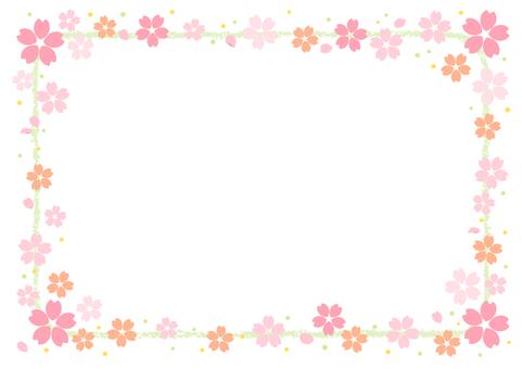 Cherry blossoms 318