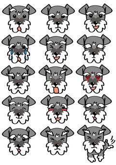 Various expressions of Schnauzer