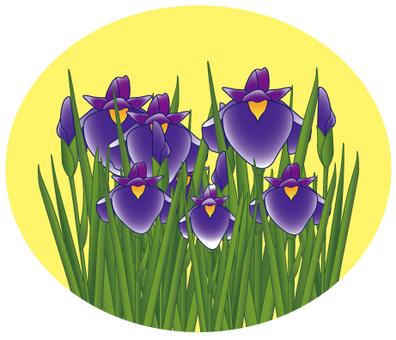 Flower - iris (shoumu) - 11