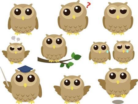 Owl illustration set