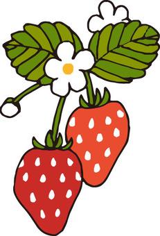 Vegetable (strawberry)
