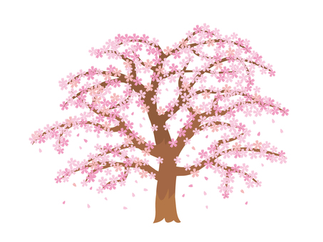 Spring cherry blossoms (scattering petals)