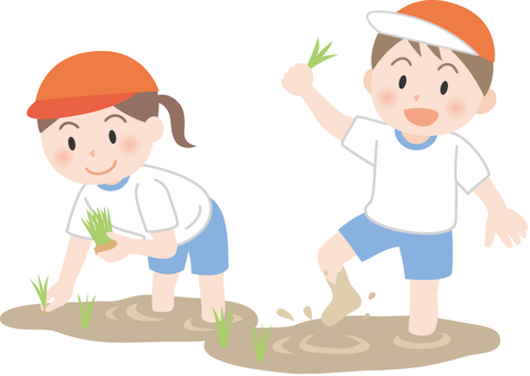 Elementary school students planting rice