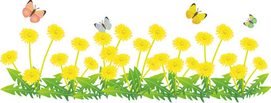 Dandelion flower garden and butterfly