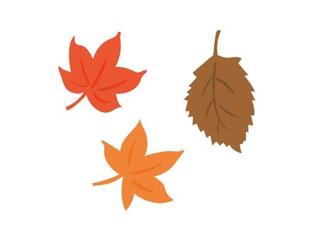 Fallen leaves and autumn leaves
