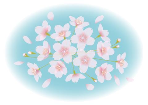 Sakura back blur 1