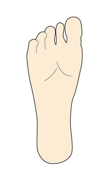 Illustration of the back of the medical foot