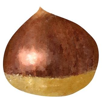 Watercolor ingredients series chestnut