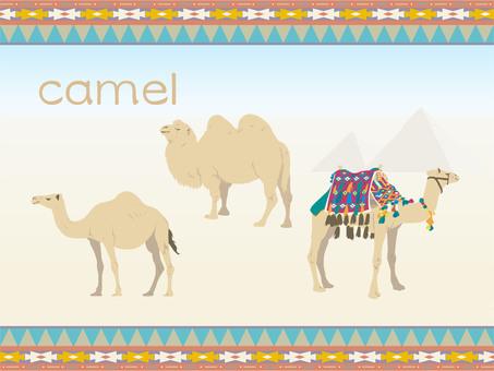 낙타 세트
