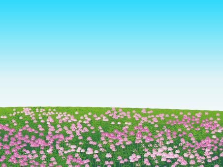 Plants of a flower of grassland Prairie landscape 03