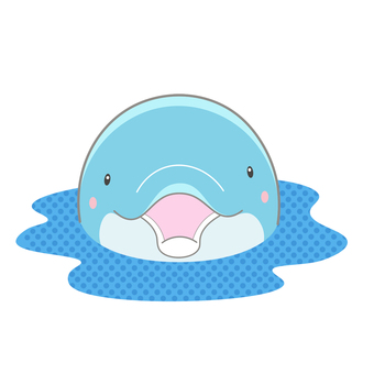 Appearance dolphin front