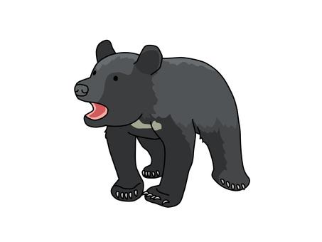 Asian black bear (small bear)