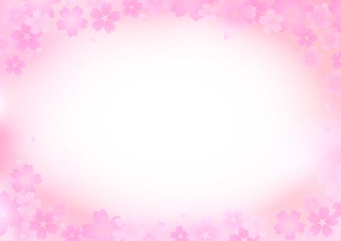 Cherry blossoms 217