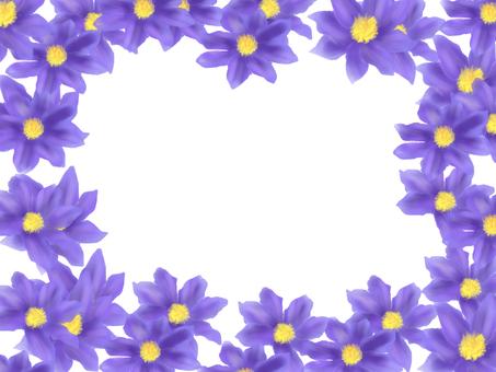 鐵線蓮紫色框架