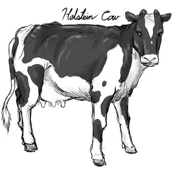 Cow B