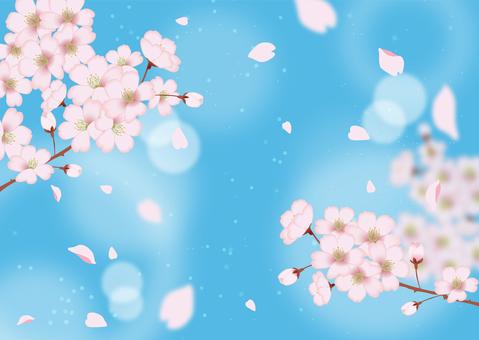 蓝蓝的天空和樱桃