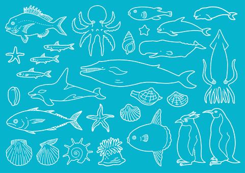 粉筆藝術海洋生物