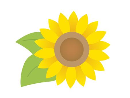 90606. Sunflower 1