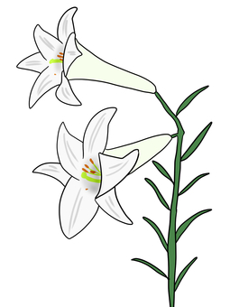 Lepidoptera lily