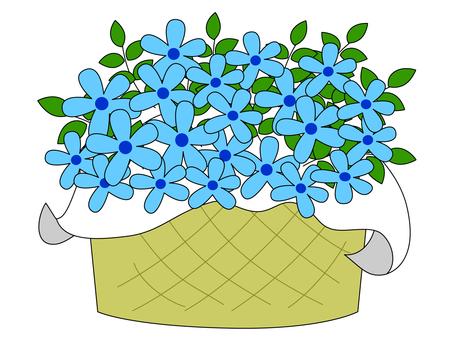블루 스타 ~ 꽃다발 꽃 선물