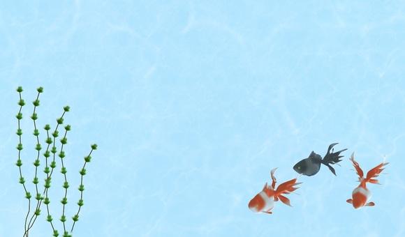 Goldfish (background) frame
