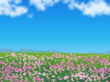 Field of flower of grass plain grassland scenery 02