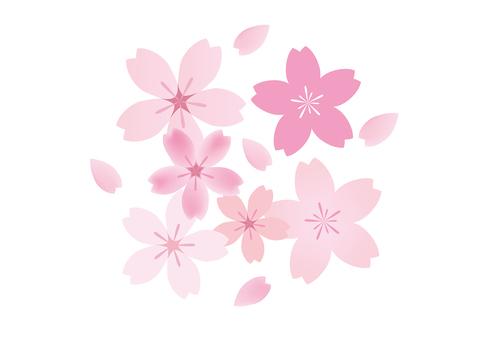 Sakura 44