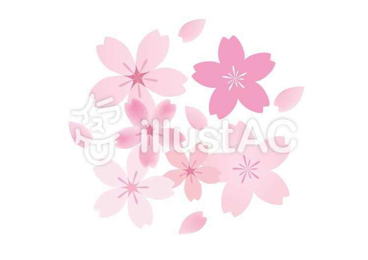 桜44のイラスト