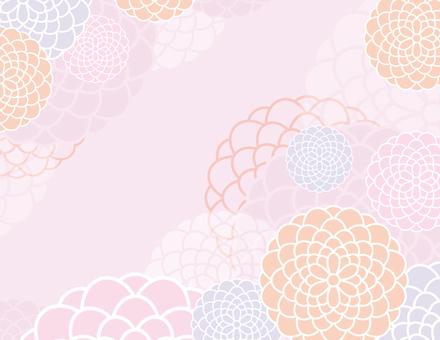 菊花背景_粉紅色