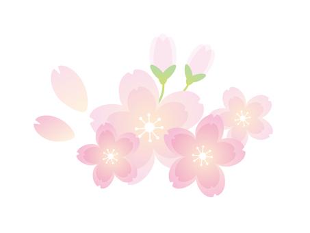綺麗な桜1