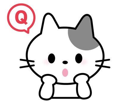 Cat _ Question