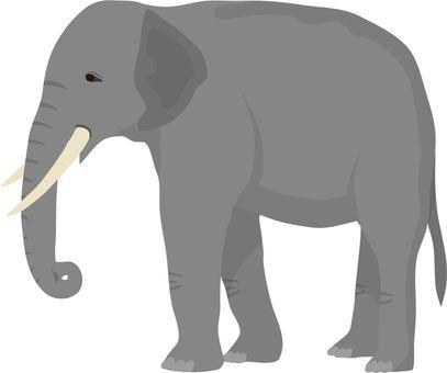코끼리 1