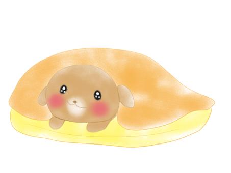 Pillowless puppy