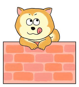 Shiba Inu and brick wall