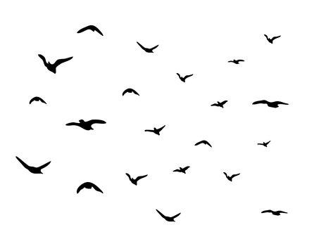 Bird overlay