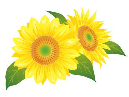 Summer flower · Sunflower (sunflower) icon B02