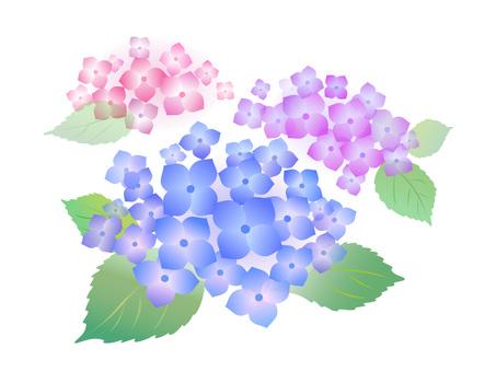 121. Hydrangea, blue 3
