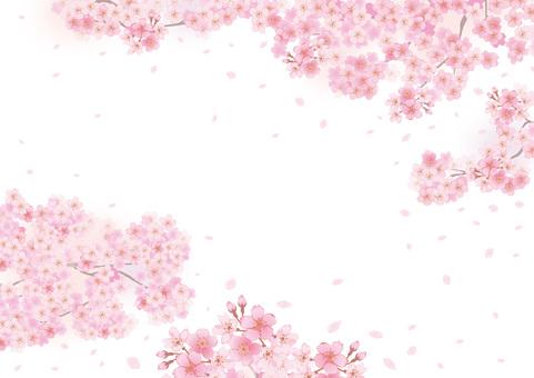 벚꽃의 프레임 52