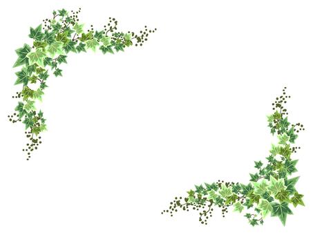 Ivy · Hedera's Green Frame
