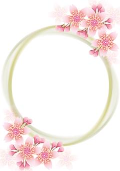 桜 flowers blooming 217
