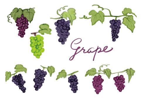 Watercolor illustration of grape