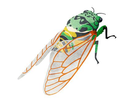 Animals _ Insects _ Minmin Seminar _ Watercolor