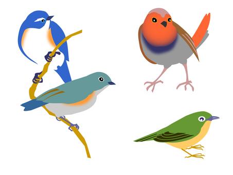 夏の小鳥 2