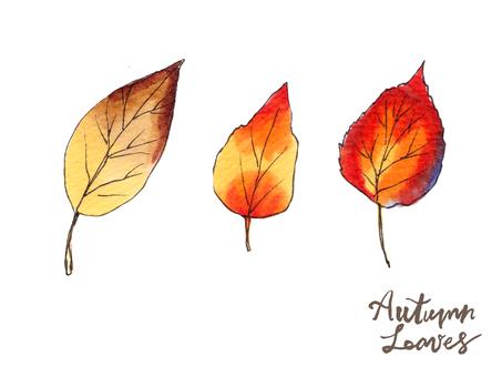 가을 나뭇잎 02