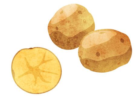 Ingredients _ Vegetables _ potatoes _ watercolor
