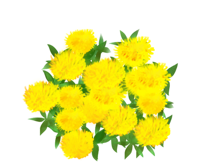 Safflower (safflower)
