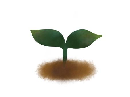 새싹 식물