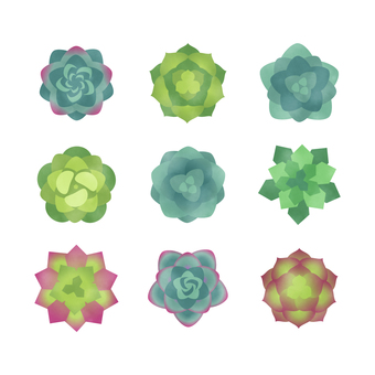 Watercolor style illustration icon set of succulents