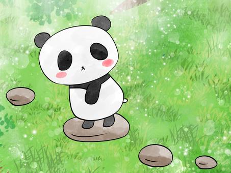 Look back on a panda