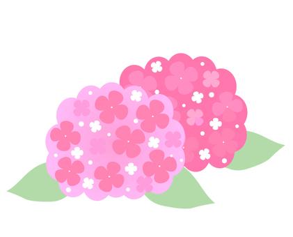 Last of hydrangea (hydrangea)